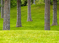 Grassy Park and Trees Royalty Free Stock Images