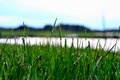 Grassy shoreline near a lake Royalty Free Stock Photo