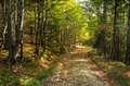 Gravel mountain road thru forest at Bobija mountain Royalty Free Stock Photo