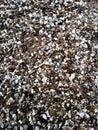 Gravel nature breakstone grit shingle Stock Image