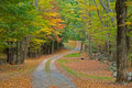 Gravel road through autumn woods Royalty Free Stock Photos