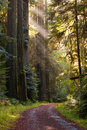 Gravel road curve through redwood forest rays of sun light beautiful scene a path lightly travelled curving a green moist pristine Royalty Free Stock Photography