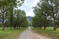 Gravel road lined with trees Royalty Free Stock Photo