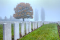 Graves of wwi soldiers at tyne cot flanders fields fallen in world war i cemetery near ypres in belgium on a misty day in autumn Royalty Free Stock Image