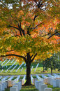 Gravestones in arlington national cemetery washington dc near to autumn scene Stock Photo