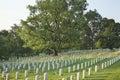 Gravestones below beautiful tree in Arlington National Cemetery Royalty Free Stock Photo