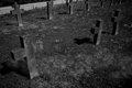 Graveyard Tombstones Royalty Free Stock Photo
