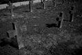 Graveyard Tombstones Royalty Free Stock Photo