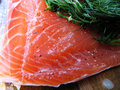Gravlox salmon Stock Photography