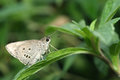 Gray butterfly Royalty Free Stock Photos