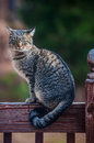 The gray cat on a fence Stock Image
