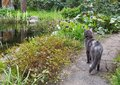 Cat on a garden path looking at flowers Royalty Free Stock Photo