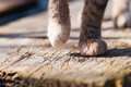 Gray cat s paws detail outdoor Royalty Free Stock Photo