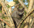 Gray cat sitting on tree in istanbul Royalty Free Stock Image