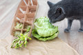 Gray cat sniffing food, green cabagge and micro greens. Cutted microgreens on crumpled craft paper. Healthy eating