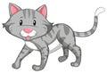 Gray cat walking on white background