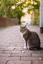 Gray cat watching her revier female sitting outdoors and nice evening bokeh Stock Photos