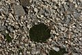 Gray crushed stones with dark green moss, background texture Royalty Free Stock Photo