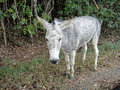 Gray donkey is standing on the road Royalty Free Stock Image