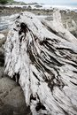 Gray driftwood at rocky beach Royalty Free Stock Photo