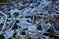 Gray fallen leaves covered with white frost Royalty Free Stock Photo