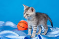Gray kitten with a ball Stock Images