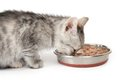 Gray kitten eats from a bowl. Isolated on white Royalty Free Stock Photo