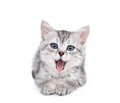 Gray kitten isolated on white small background Royalty Free Stock Photography
