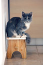Gray kitten portrait of a grey sitting on a wooden stool Stock Image