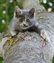 Gray kitten on a tree Royalty Free Stock Photo