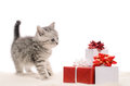 Gray kitty and boxes of gifts funny playful on white background Royalty Free Stock Photos