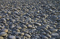 Gray pebbles. Royalty Free Stock Photo