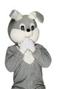 Gray plush rabbit isolated white background Stock Photography