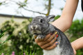 Gray rabbit Royalty Free Stock Photo