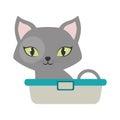gray small cat sitting green eyes bathtub Royalty Free Stock Photo