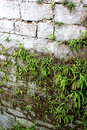 Gray Stone Wall With Green Fer...