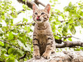 Gray striped kitten licked sitting on a tree Royalty Free Stock Photo