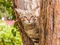 Gray striped kitten sitting on the tree trunk Royalty Free Stock Photo