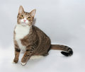 Gray tabby cat with yellow eyes sitting on gray background Royalty Free Stock Photos