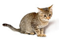 Gray tabby kitten on a white background Stock Photo