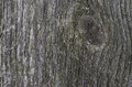 Gray texture of old wood close up Stock Photography