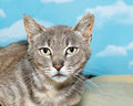 Gray and white tabby kitten on blanket Royalty Free Stock Photo