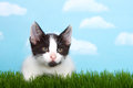 Gray and white tabby kitten in grass Royalty Free Stock Photo
