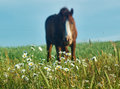 Grazing horse.