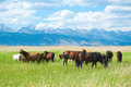 Grazing horses Royalty Free Stock Photography
