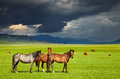 Grazing horses Royalty Free Stock Photo