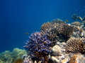 Great Barrier Reef Australia. Royalty Free Stock Photo