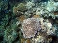 Great Barrier Reef, Underwater Stock Image