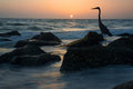 Great blue heron silhouette at sunset a on the beach Stock Photography