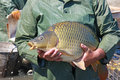 Great catch of fisherman carp fish Royalty Free Stock Photo